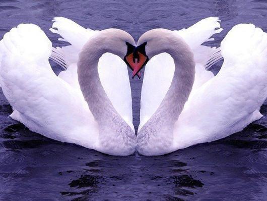 très beau l'amour