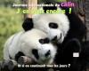 Câlin Câlin :)