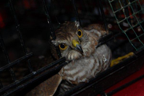 Sauver la vie d'un faucon crésserelle fait beau début d'année :)