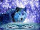 Photo de loups-louves-25