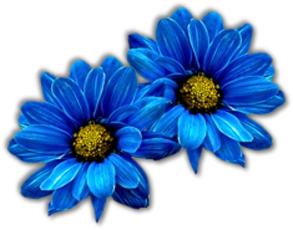 """"""" Bleu """" ..."""