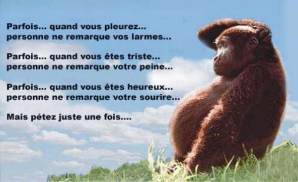 """"""" Juste pour rire """" ..."""