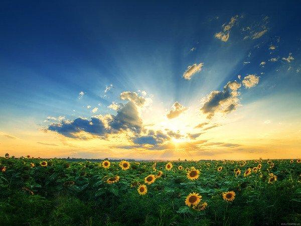 """"""" Les fleurs ne nous laissent jamais tomber """"..."""
