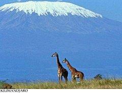 Les neiges du Kilimandjaro - Ernest Hemingway