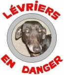 Photo de blog-levriers-en-danger
