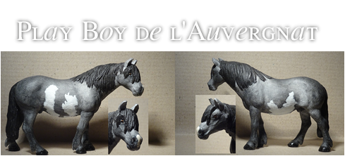 Play Boy de l'Auvergnat