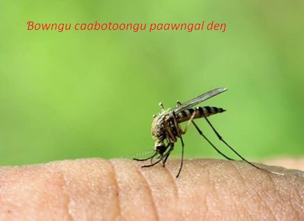 Winndannde faytunde e paawngal Dengue (Deŋ)