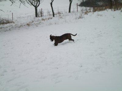 Une petite dernière dans la neige!