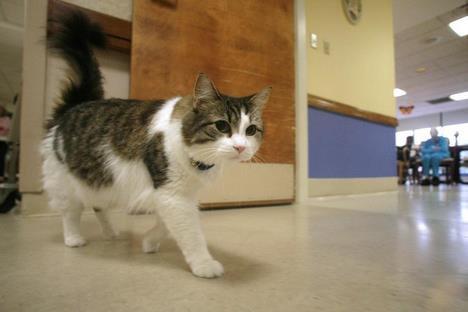Oscar, le chat qui prédit la mort