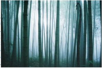 Aokigahara Jukai, la forêt maudite du Japon, la forêt des suicides