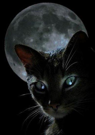 Oscar : le chat qui prédit la mort