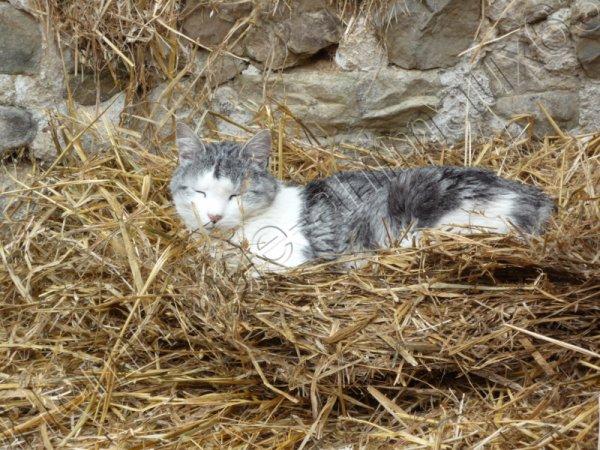 Tigrou (né le ............ décédé la semaine du 18 au 22 juin 2012)