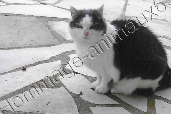 Mimine Né le ............ Décédé le 4 Septembre 2014