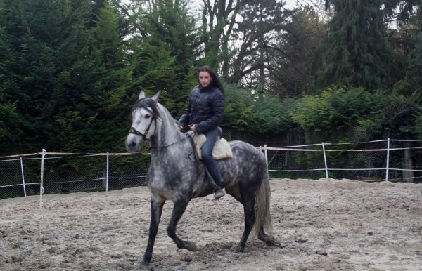 mon nouveau cheval canero pp pure race espagnol de 6 ans .