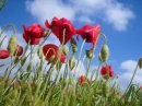Photo de fleurdechamps