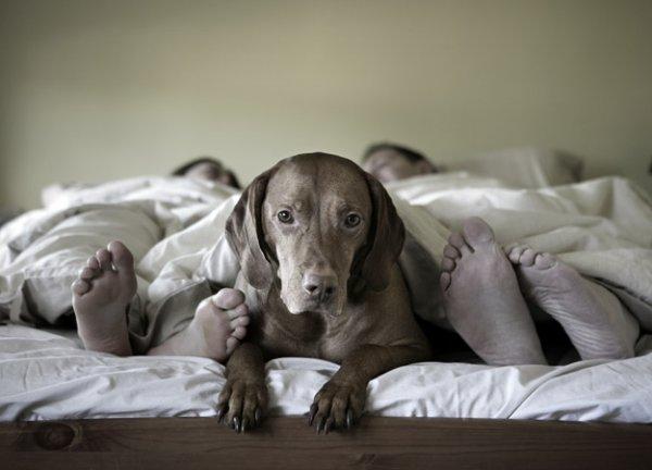 Dur de faire confiance à l'être humain, même les aveugles préfèrent être guidés par des chiens.