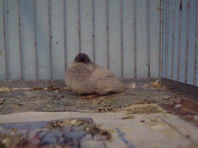 mon jeune est sortiii du nid
