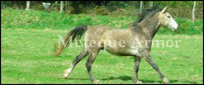 Bienvenue sur xPretty-poney