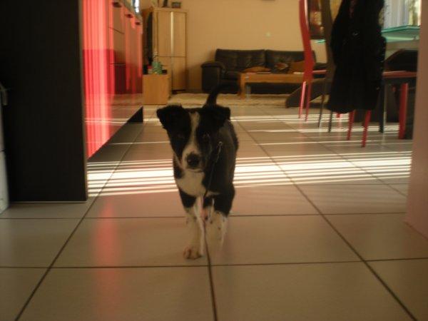 Encore Slurpy Newt parce que c'est le chien le plus mignon