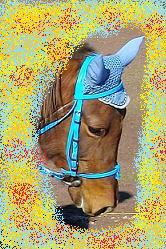 bonnet bleu acier EQUITHEM très bon état