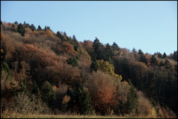 Le temps d'un automne.