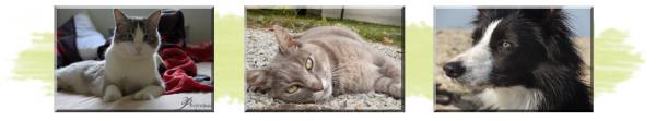 © Article 23 de Pet-House : les Filleuls