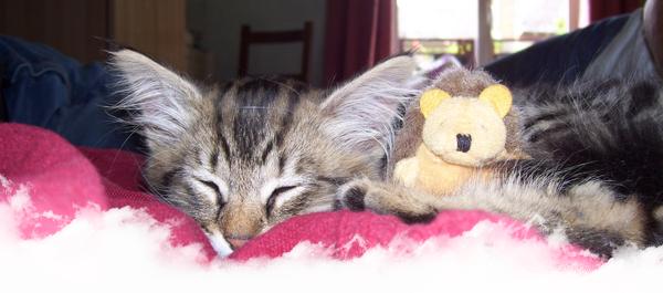 © Article 20 de Pet-House : La F.A.Q
