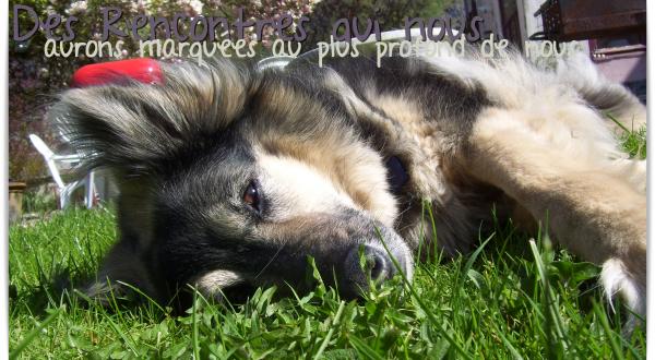 © Article 21 de Pet-House : Magnifiques Rencontres