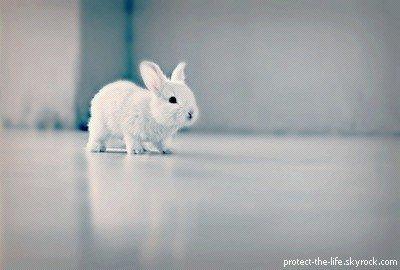 Contre l'expérimentation animale.