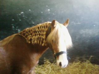 les chevaux plus q'une passion