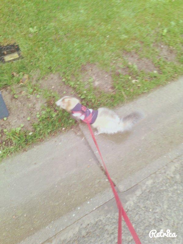 promenade sous la pluie d'un mois de novembre ^^