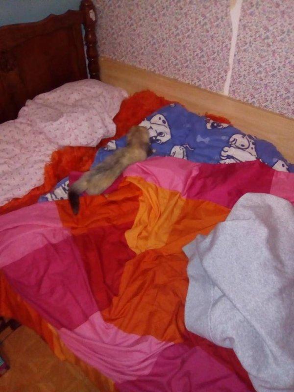 Dans le lit de maman *_*