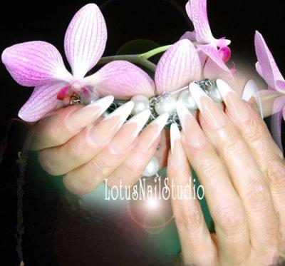 Orchidées......