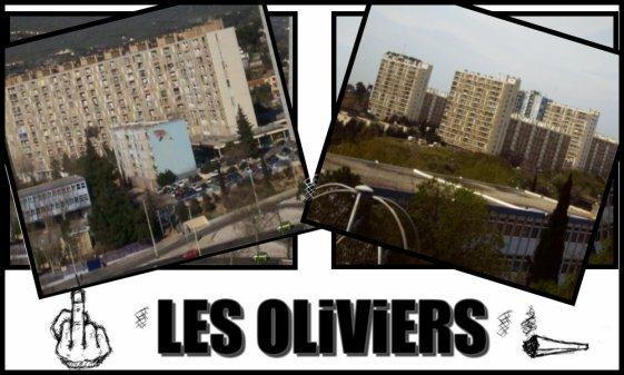 LES OLIVIERS OU LE QUEENS ...