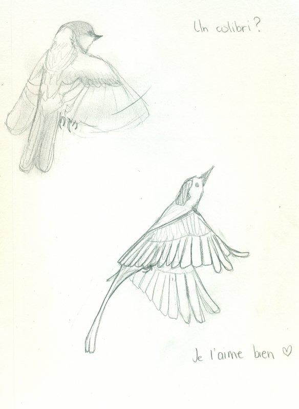 La différence qu'il y a entre les oiseaux et les hommes politiques, c'est que de temps en temps les oiseaux s'arrêtent de voler ! -- Coluche,  Y s'foutent bien de notre gueule
