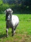 Photo de mon-poney-appaloosa