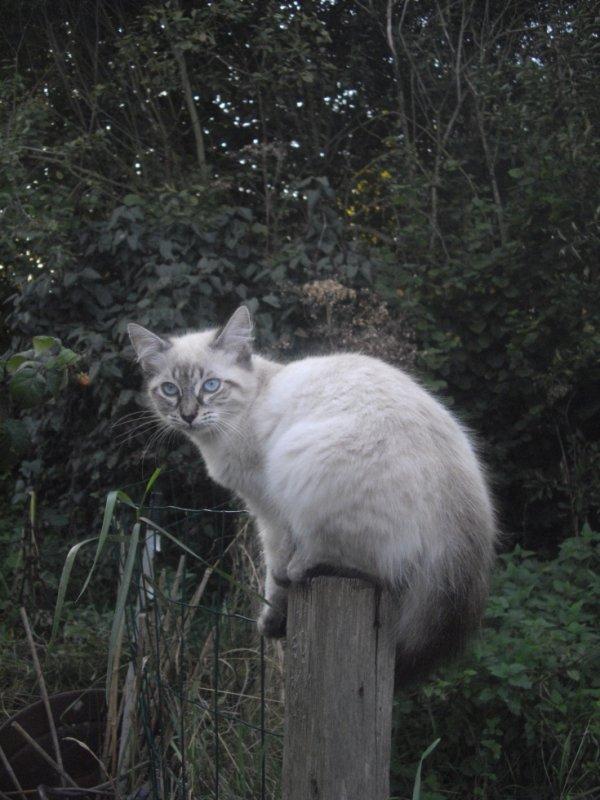 je vous présente Théo, le chat de mon fils