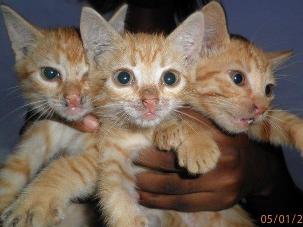 mes 3 chéris du coeur