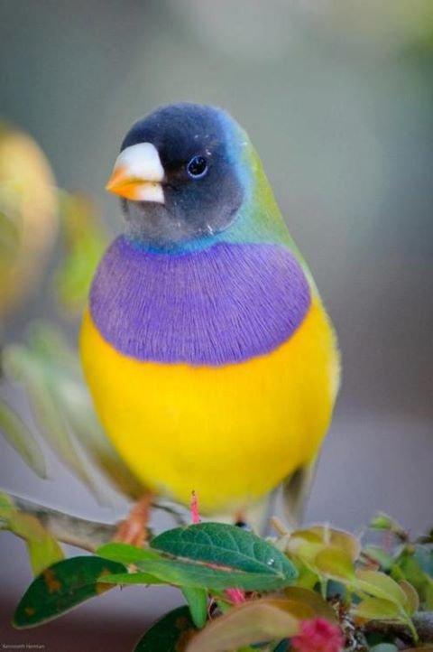 comment vous trouvez ces oiseaux!!!