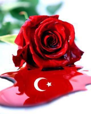 Acheter Des Roses Noires ou acheter des roses noires | vignesenselle