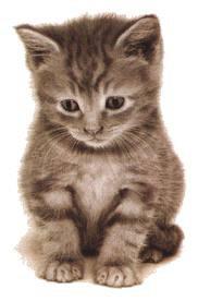 la chat