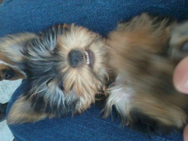 my new dog , Iris w
