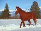 et ouais encore des chevaux <3