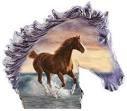 un cheval <3