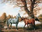 encore des chevaux <3