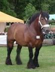 chevaux de trait