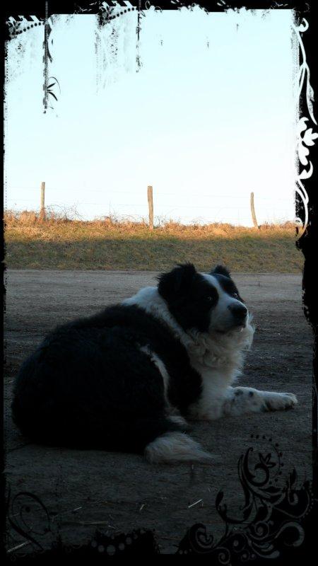 Tomy :: My dog