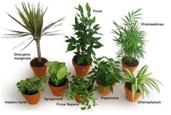 Pour avoir des plantes bien verte