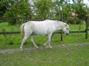 Photo de i-love-the-horse-world