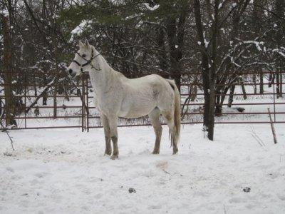 « On achète les bons chevaux à l'écurie. »